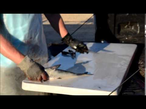 How to clean / fillet a catfish quick and easy. from YouTube · High Definition · Duration:  4 minutes 58 seconds  · 20,000+ views · uploaded on 5/21/2017 · uploaded by Mason Outdoors