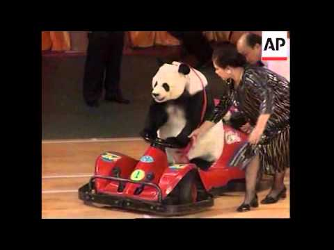Weightlifting Panda Performs At Beijing State Circus Youtube