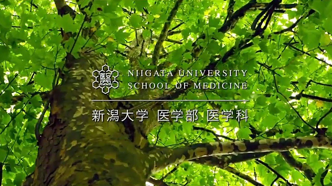 新潟 大学 医学部