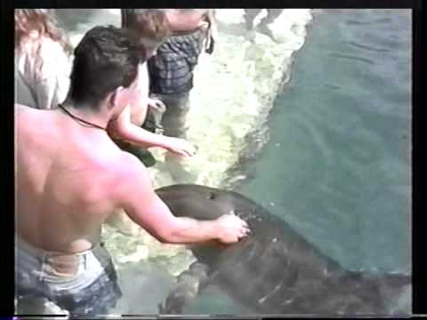 Dolphins of Blue Lagoon - Nassau