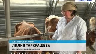 Молочная ферма в Шаргайте ежедневно сдает более 300 литров молока(Современный комплекс, доильные аппараты и новые технологии. Молочная мини-ферма в Шаргайте Шебалинского..., 2014-04-07T09:23:54.000Z)