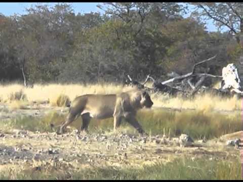 Namibie Bostwana 2012