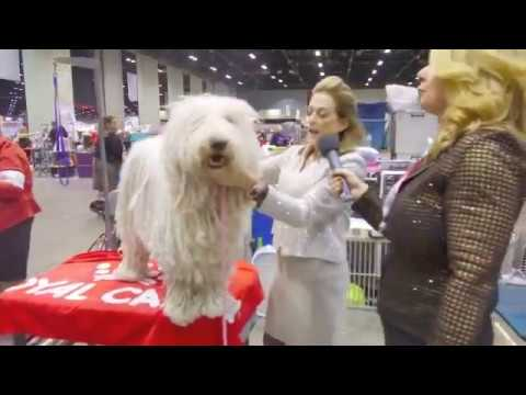 Nina Fetter shows us how to manage cords on a Komondor