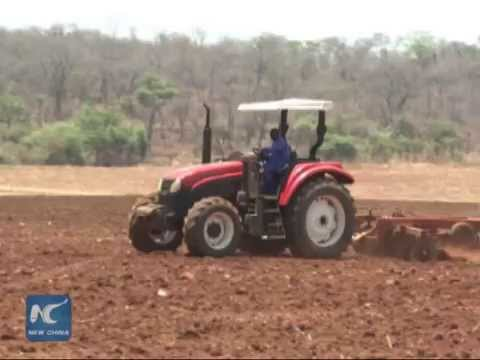 China-Zimbabwe model farm brings skills, jobs to locals