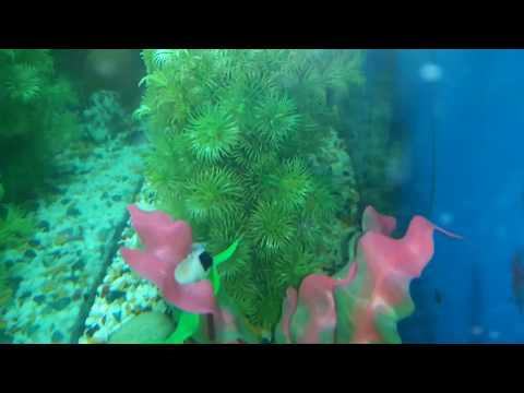 #101. Why Fishes Gone Missing From Aquarium.