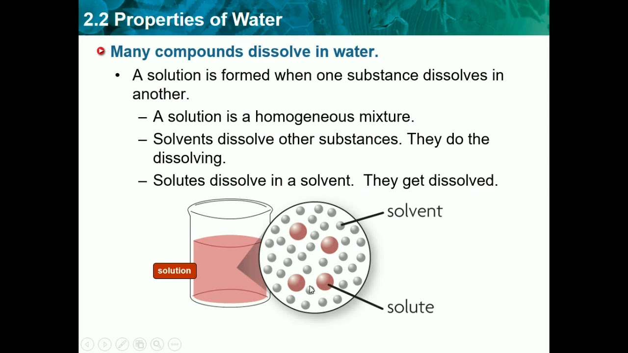 Biology Ch 2 2 Properties Of Water