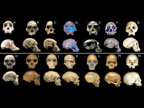 Creationism vs. Science
