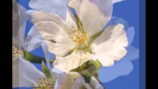 マイ スライドショー 仁徳天皇陵と周辺(2015年4月2日) この動画...