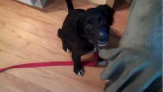 Personal Dog Training- Silent Commands With Peanut:  Http://personaldogtraining.org/