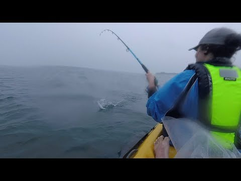 Fishing The Mackerel Run In Simonstown Off A Kayak