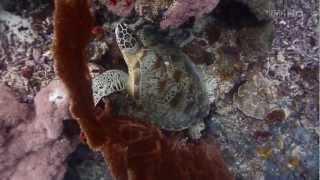 podwodna azja 1