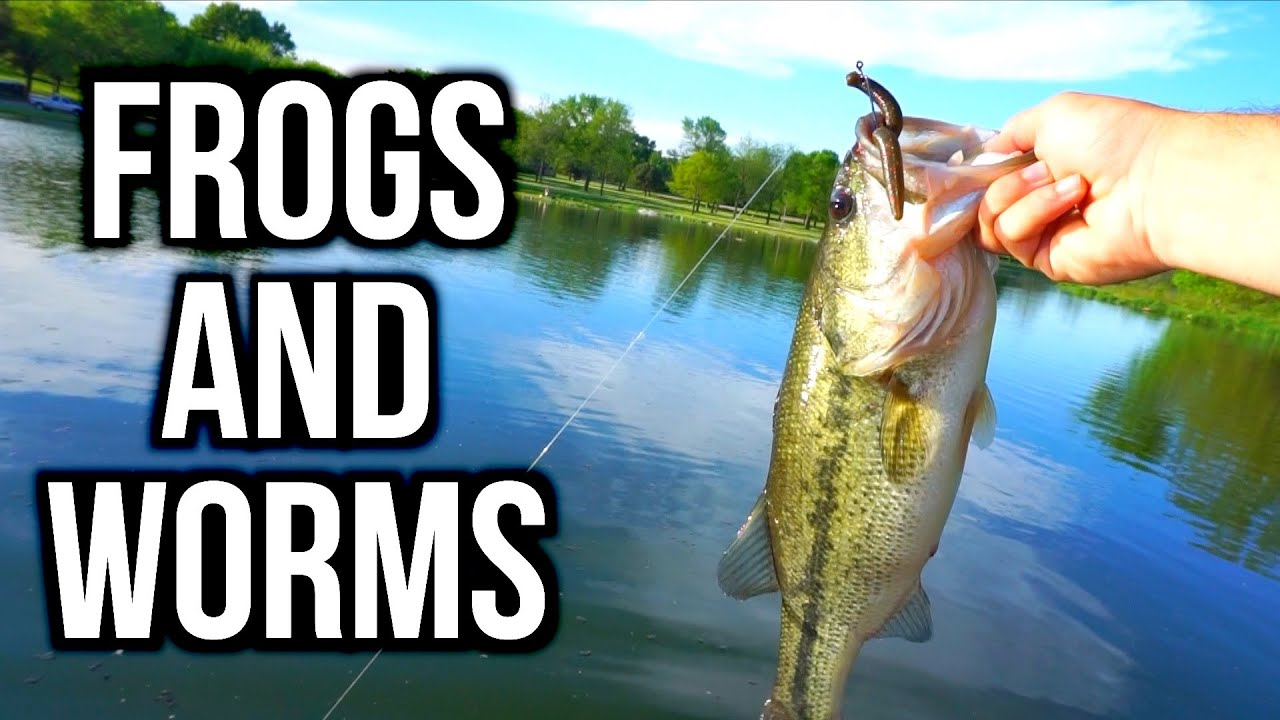Spring bass fishing with frogs and plastic worms youtube for Best plastic worms for bass fishing