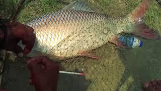 Big Rohu Fishing Videos By Fish Hooks