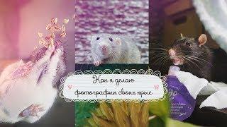История моих фотографий l Крысы