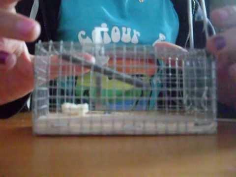 Pi ge souris youtube for Attraper souris maison