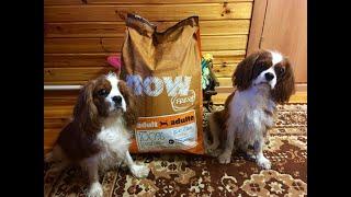 Покупки из зоомагазина для собак. Кавалер Кинг Чарльз спаниель.