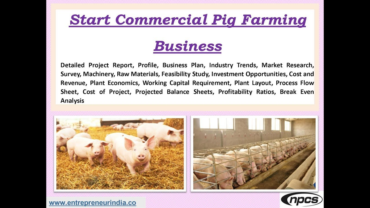 Business plan of pig farming
