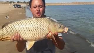 Шардара рыбалка турнир 23.09.2018