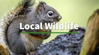 Local Wildlife: The Douglas Squirrel