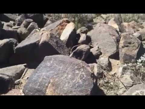 Prehistoric Petroglyphs in Saguaro National Park