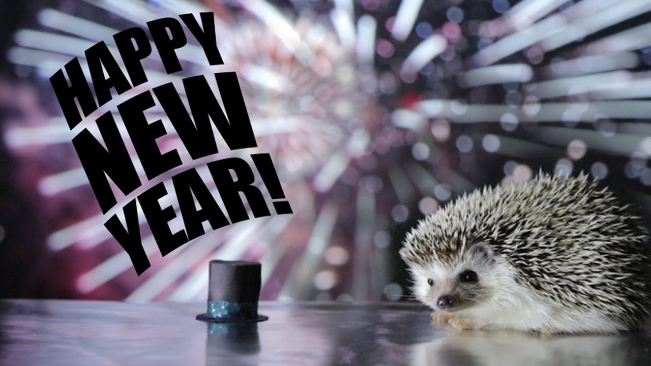HAPPY NEW YEAR! - HARLEY THE HEDGEHOG E-CARD - YouTube