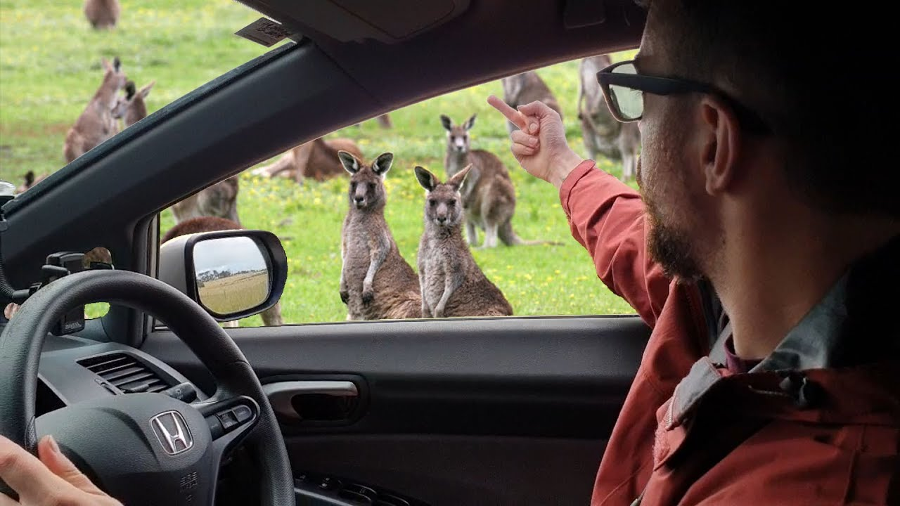 Verbally Abusing Animals On Phillip Island