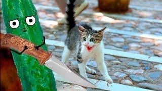 Коты боятся огурцов???