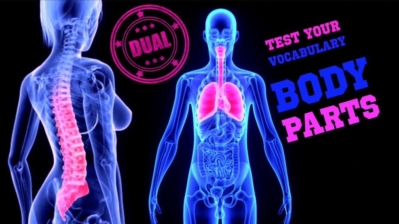 Teste seu Vocabulário em Inglês - Partes do Corpo