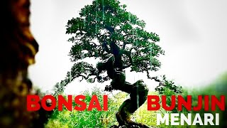 Bonsai Bunjin Menari | Bonsai Dancing