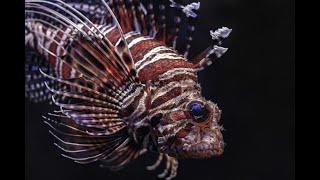 Гороскоп на август 2020 года для Рыбы