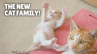 The New Cat Family! | Kittisaurus
