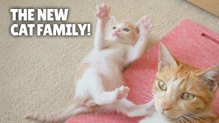 The New Cat Family!   Kittisaurus