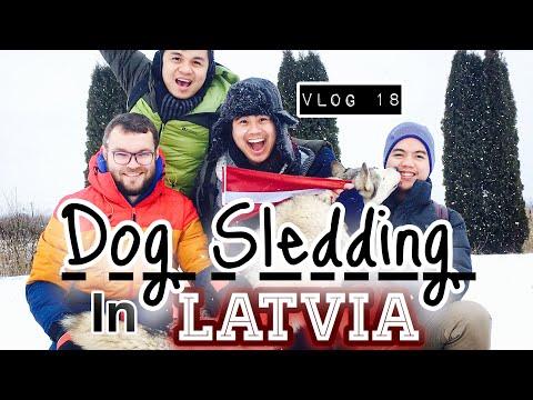 Dog Sledding in Latvia |  Best Adventure Activity in Latvia!