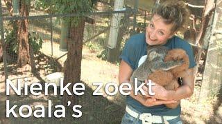 Nienke op zoek naar koala's! | Het Klokhuis
