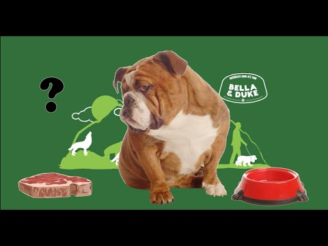 Dogs Who Are Fussy Eaters - Tips To Help