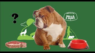 Dogs Who Are Fussy Eaters  Tips to help