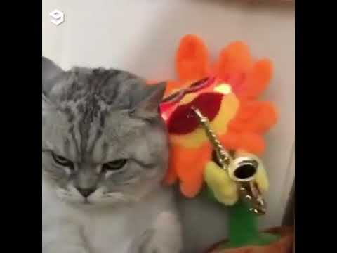 Cats Vs Dancing Flowers