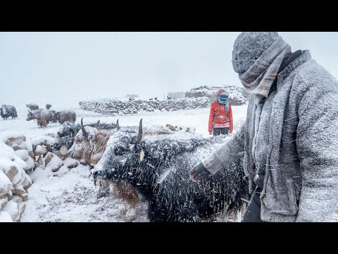 A Winter Storm in Changthang | Living with the Changpas of Ladakh - 4/6