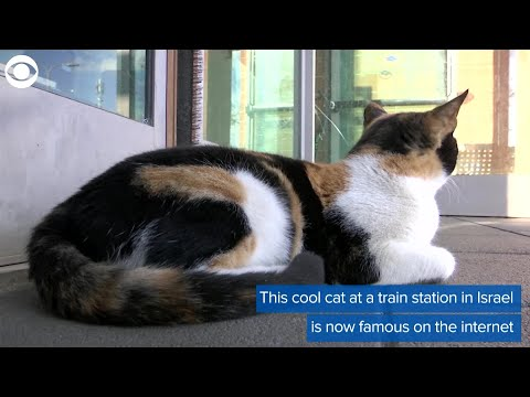 Web Extra: Mitsi The Cat Becomes Train Station's Mascot