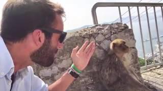 Alvaro Ojeda intenta robar un mono en Gibraltar para salvarlo del Brexit