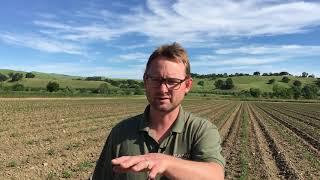 Prep work underway for organic vegetable planting