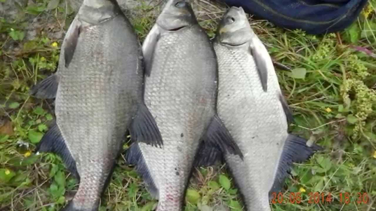прикормка диалоги о рыбалке