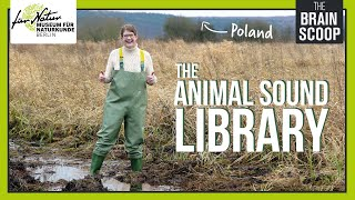 The Animal Sound Library