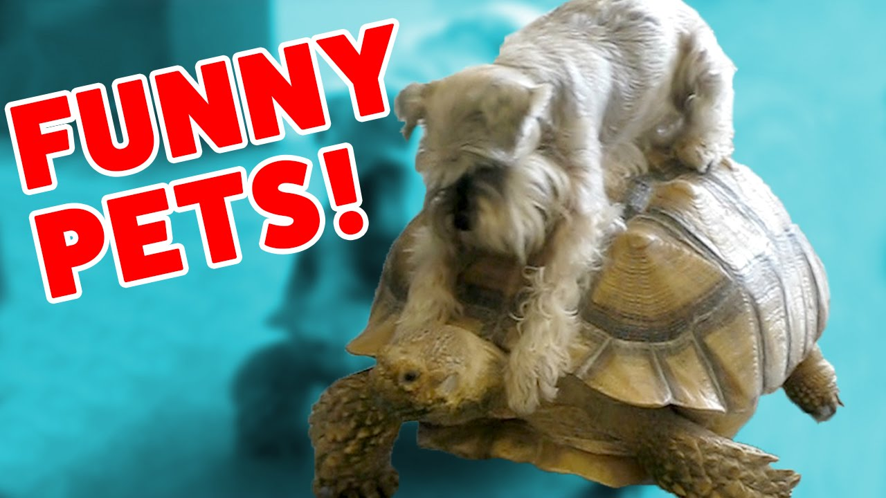 DOG RIDES A TURTLE & MORE Funny Pet Videos, Bloopers & Moments of 2016 Weekly Compilation