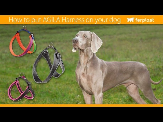 Ferplast - How to put Agila Harness on your dog - GB
