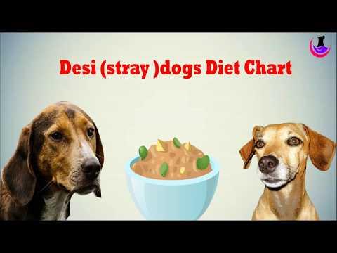 Dog Food Chart- Desi/Stray Dogs