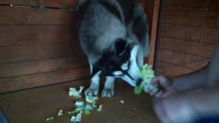 Lexy a salát