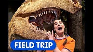 Dinosaur Discoveries | Caitie's Classroom | Museum Field Trip