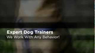 Private Dog Lessons Encinitas Ca Private Dog Training