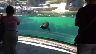 Sea Lion Worried About Little Girl ORIGINAL